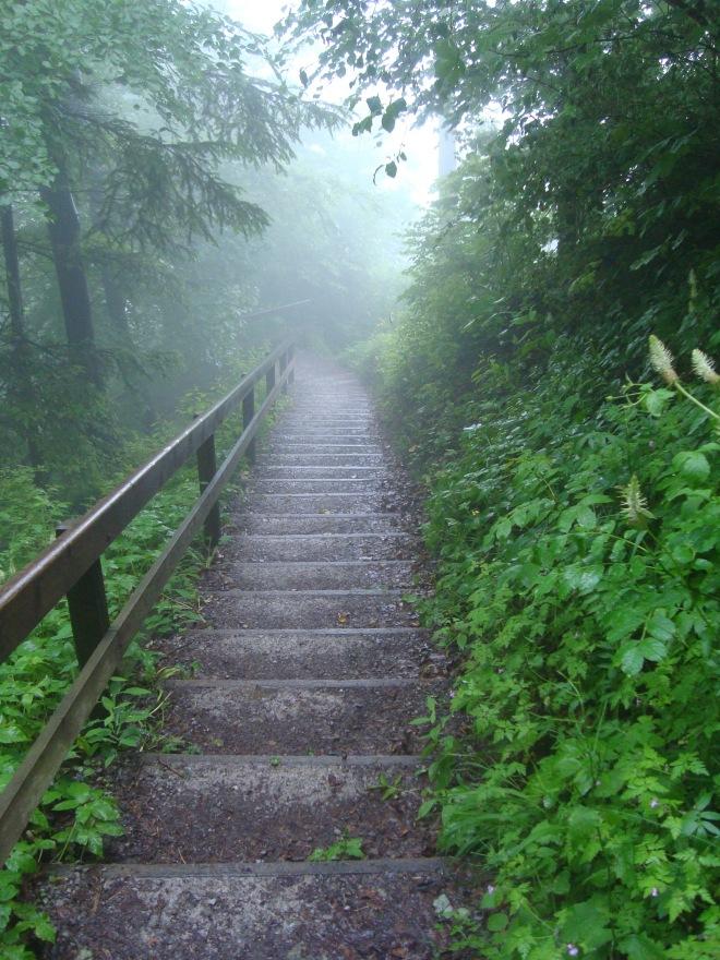Το δάσος Uetliberg